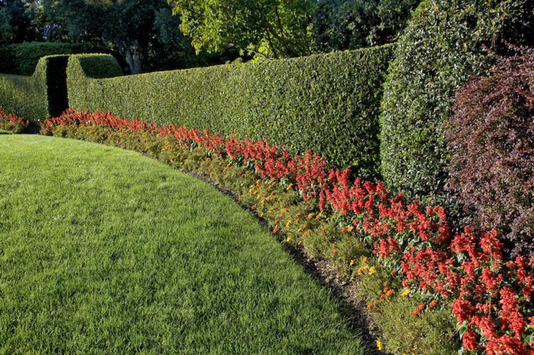 attractive-garden-cedar-hedge