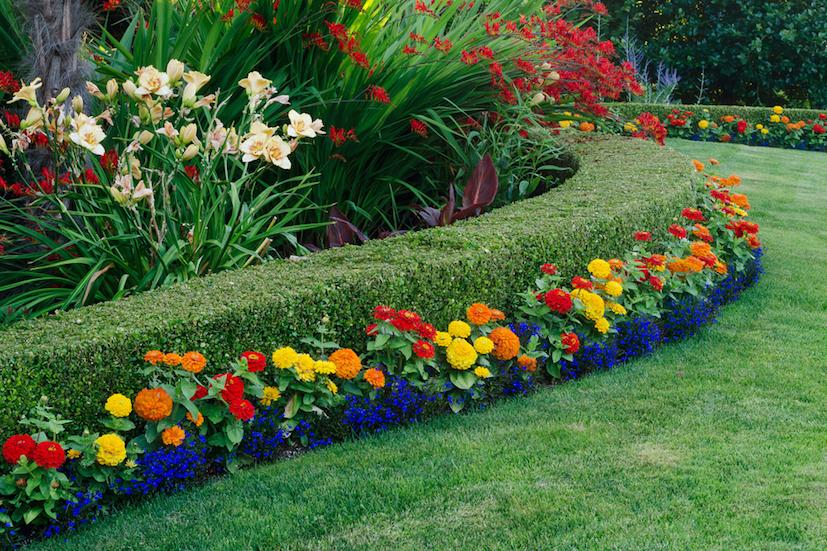 beautiful-dwarf-boxwood-shrubs-with-flowers