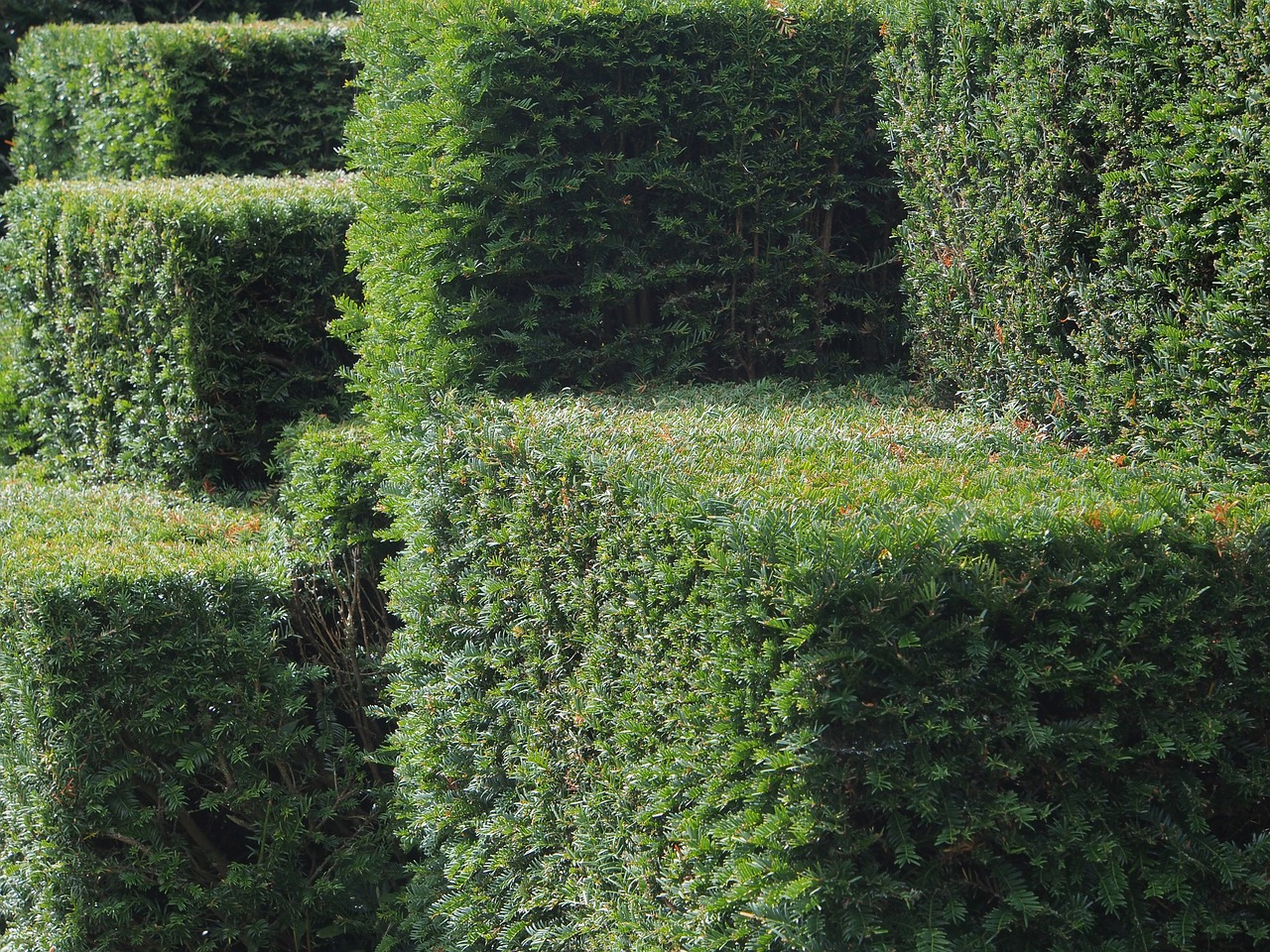 hedge-cut-geometrically
