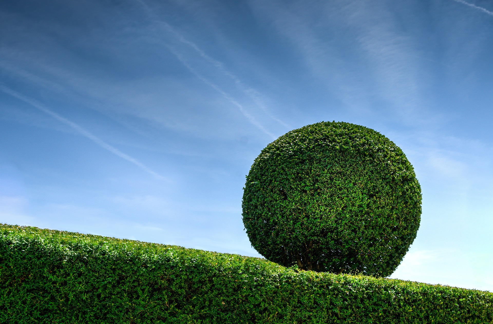 hedge-cutting-ideas-large-sphere