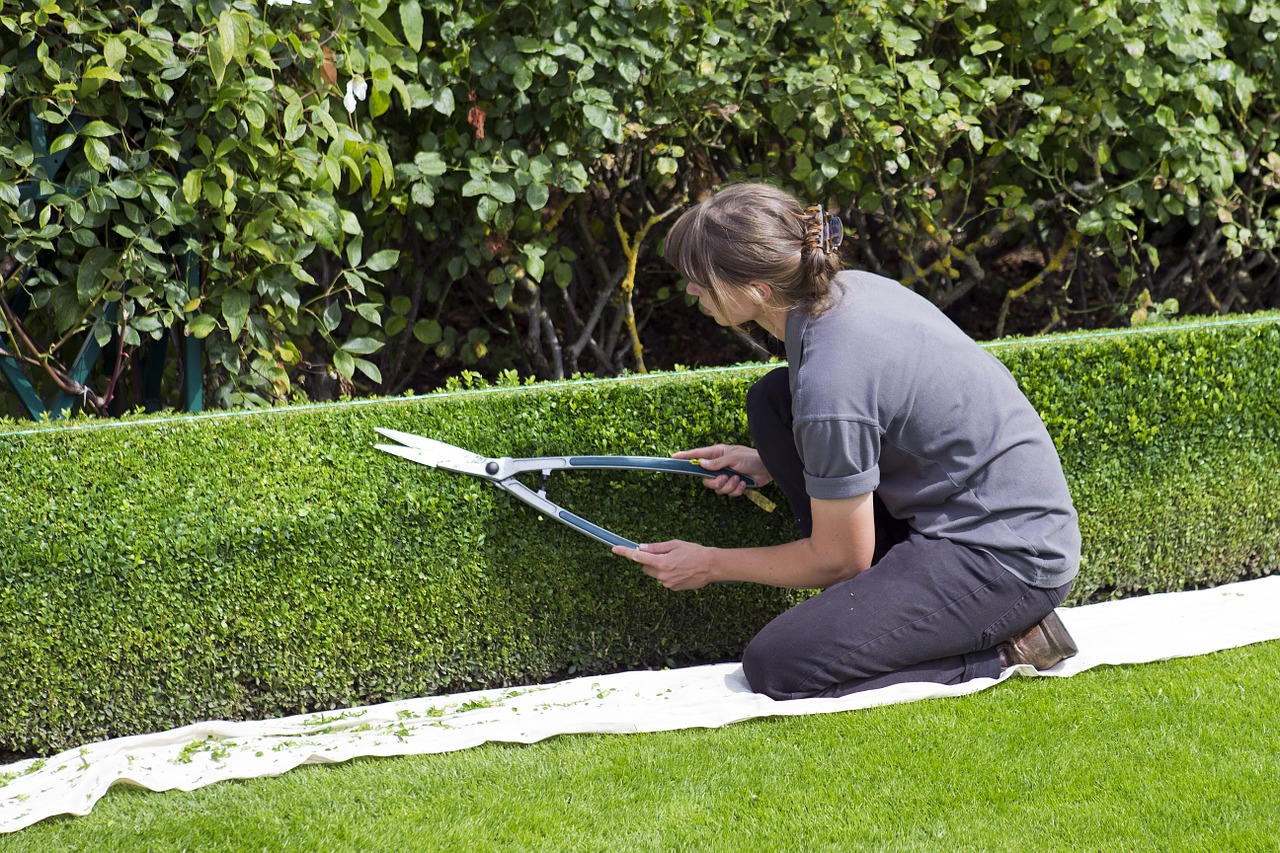 hedge-cutting-woman-using-string-to-create-a-straight-edge