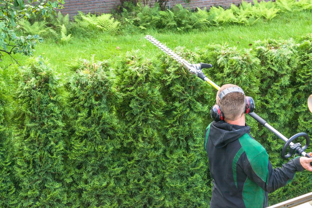 professional-gardener-trimming-cedar-hedge