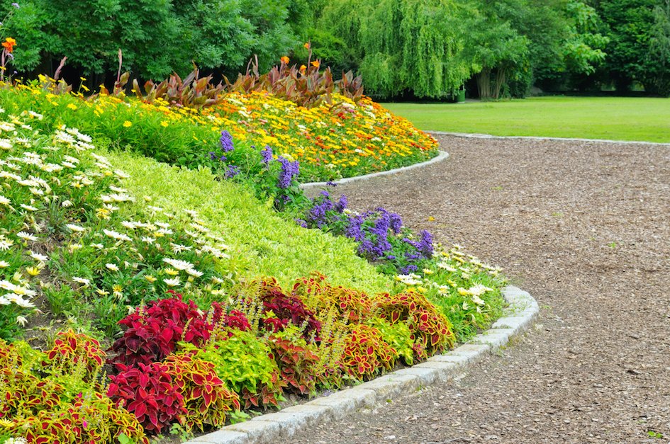 shrub-island-with-berm-and-stunning-flowers